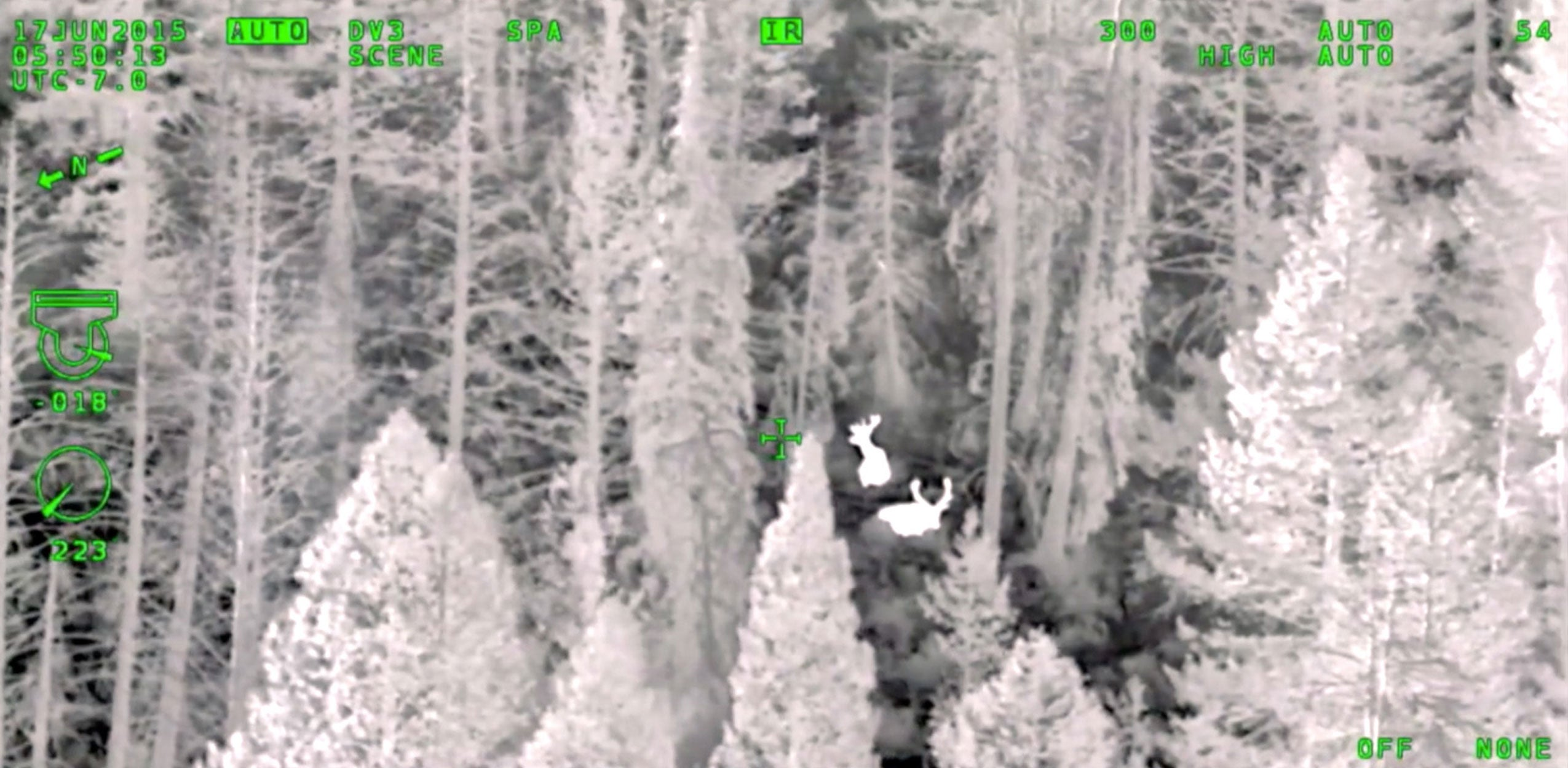 Electro-optical infrared camera image of deer in the woods captured with a WESCAM MX-Series system